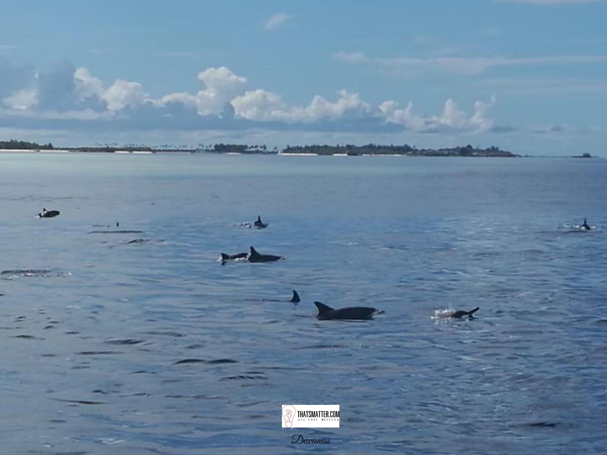 มัลดีฟส์ Dolphin Watching ดูโลมา
