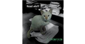 Reader ที่เป็นคุณสมบัติสำคัญและมีอยู่บนทุก Web safari